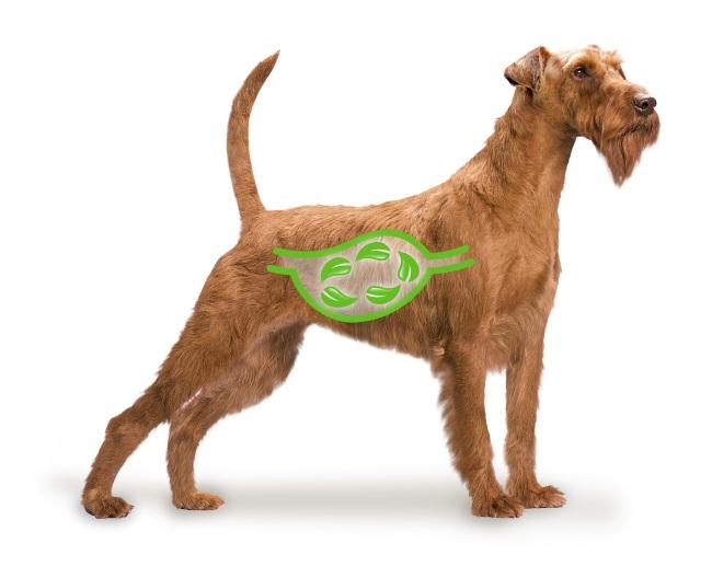 parásitos intestinales perros a humanos