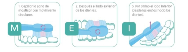 cepillado dientes mam grafico