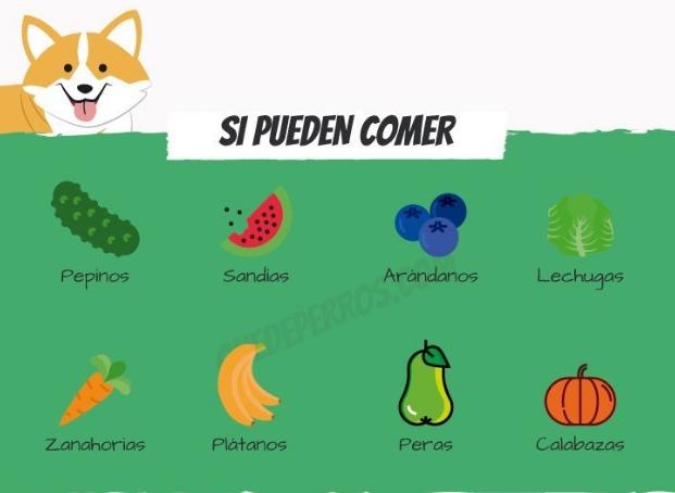 frutas-para-perros