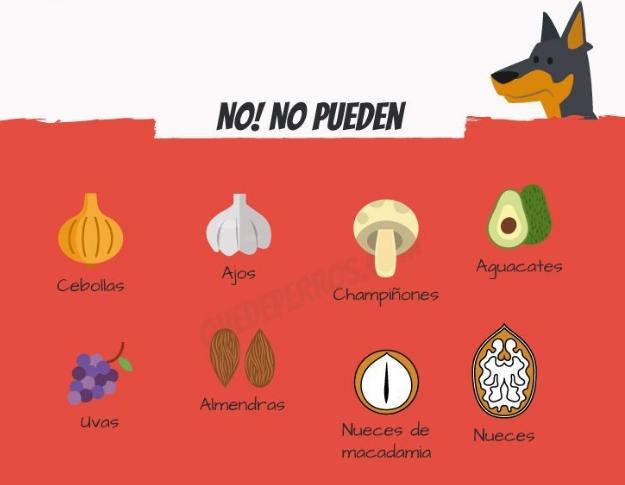frutas-para-perros4