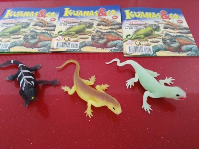 iguana&co8
